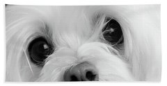 Portrait Of A Maltese Dog Beach Towel