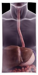 The Digestive System Beach Towel