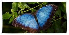 A Blue Morpho Butterfly  Beach Towel