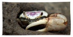 A Fiddler Crab Around Hilton Head Island Beach Sheet by Kim Pate