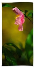 A Golden Day Portrait Of A Pink Camellia Beach Sheet by Rebecca Sherman