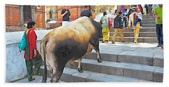 A Holy Cow Climbing Steps From Bagmati River In Kathmandu-nepal  Beach Sheet
