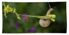 A Snail Clings To A Branch In Prado Del Beach Towel