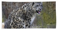 A Snow Leopards Tongue Beach Towel by David Millenheft