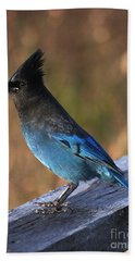 Beach Towel featuring the photograph A Stellers Jay On The Boardwalk by Stanza Widen