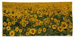 A Sunflower Field In Provence Beach Sheet by Susan Rovira