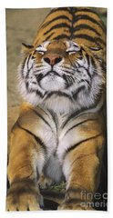 A Tough Day Siberian Tiger Endangered Species Wildlife Rescue Beach Towel