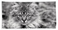 A Young Maine Coon Beach Towel
