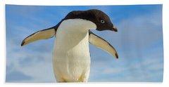 Adelie Penguin Flapping Wings Antarctica Beach Sheet by Yva Momatiuk John Eastcott