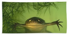 African Clawed Frog Beach Towel