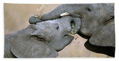 African Elephant Calves Playing  Beach Towel