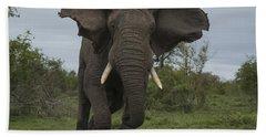 African Elephant Charging Sabi-sands Beach Towel