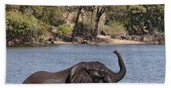 African Elephant In Chobe River  Beach Towel