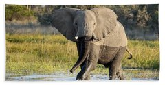 Beach Sheet featuring the photograph African Elephant Mock-charging by Liz Leyden