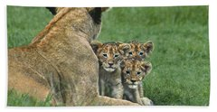 Beach Towel featuring the photograph African Lion Cubs Study The Photographer Tanzania by Dave Welling