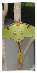 African Moon Moth Beach Sheet