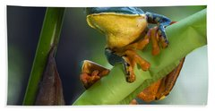 Agalychnis Calcarifer 4 Beach Sheet by Arterra Picture Library