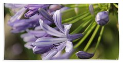 Agapanthus Flower Close-up Beach Sheet