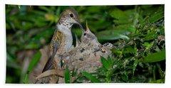 Allens Hummingbird Feeds Young Beach Towel
