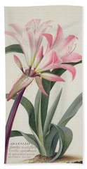 Amaryllis Belladonna, 1761 Beach Towel