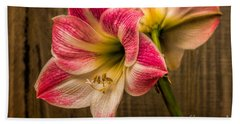 Amaryllis Blooms Beach Sheet