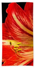 Amaryllis Pollen Beach Sheet