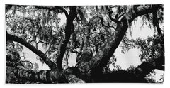 Amazing Oak Tree Beach Sheet by Debra Forand