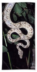 Amazon Tree Boa Beach Towel by James Brunker