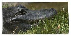 American Alligator Closeup Beach Sheet by David Millenheft