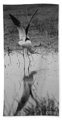 American Avocet Reflection Beach Sheet