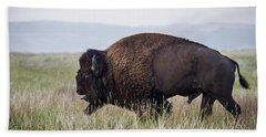American Bison Wind Cave South Dakota Beach Towel