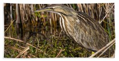 American Bittern Beach Sheet