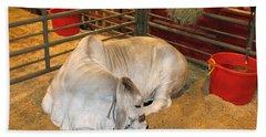 American Brahman Heifer Beach Sheet by Connie Fox