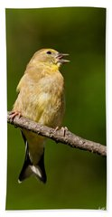 American Goldfinch Singing Beach Sheet