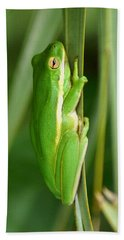 American Green Tree Frog Beach Towel by Kim Pate