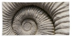 Ammonites Fossil Shell Beach Sheet