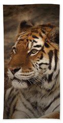 Amur Tiger 2 Beach Towel