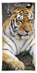 Amur Tiger Beach Towel