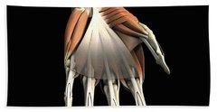 Anatomy Of The Hand Left Beach Towel