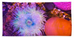 Anemone And Friends Beach Sheet