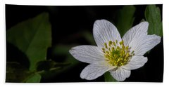 Anemone Nemorosa  By Leif Sohlman Beach Sheet by Leif Sohlman