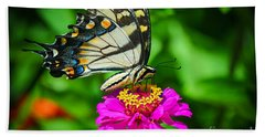 Anise  Swallowtail Butterfly Beach Towel by Peggy Franz