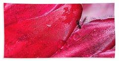 Ant Exploring Protea Petals Beach Towel