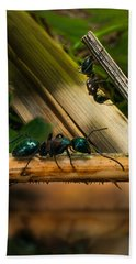 Ants Adventure 2 Beach Towel