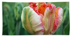 Apricot Parrot Tulip Beach Sheet by Joseph Skompski