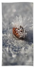 Arctic Pine Cone Porcupine Beach Towel by Brian Boyle