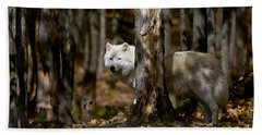 Beach Towel featuring the photograph Arctic Wolf In Forest by Wolves Only