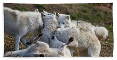 Arctic Wolf Pictures 1001 Beach Towel