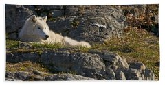 Arctic Wolf Pictures 1013 Beach Towel