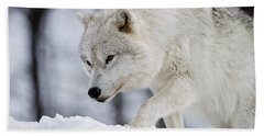 Arctic Wolf Pictures 1054 Beach Towel